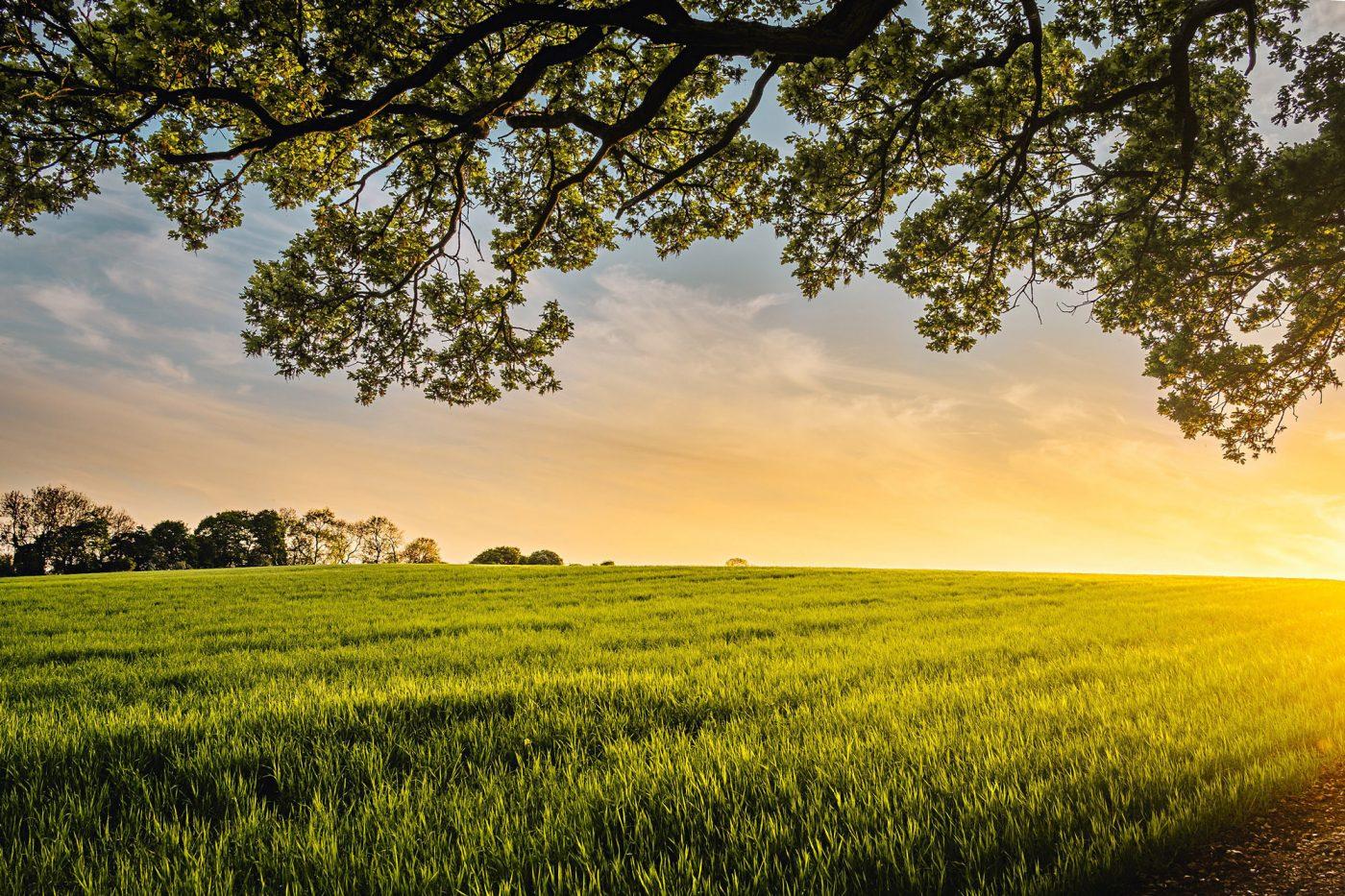 Wiese und Bäume mit aufgehender Sonne im Hintergrund.